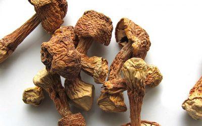 A természet ajándékai – A Mandulagomba