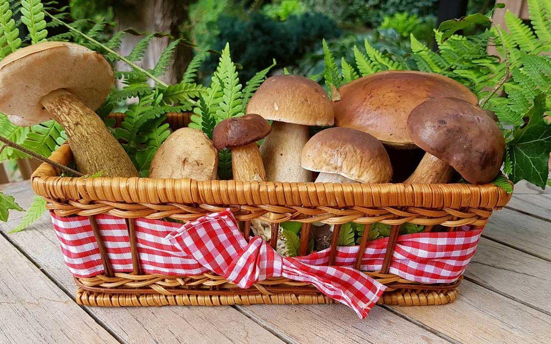 A gombák szerepe az egészségmegőrzésben